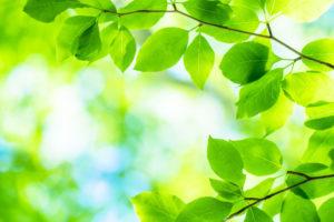 自粛のなかでも、緑がきれいになってきました。